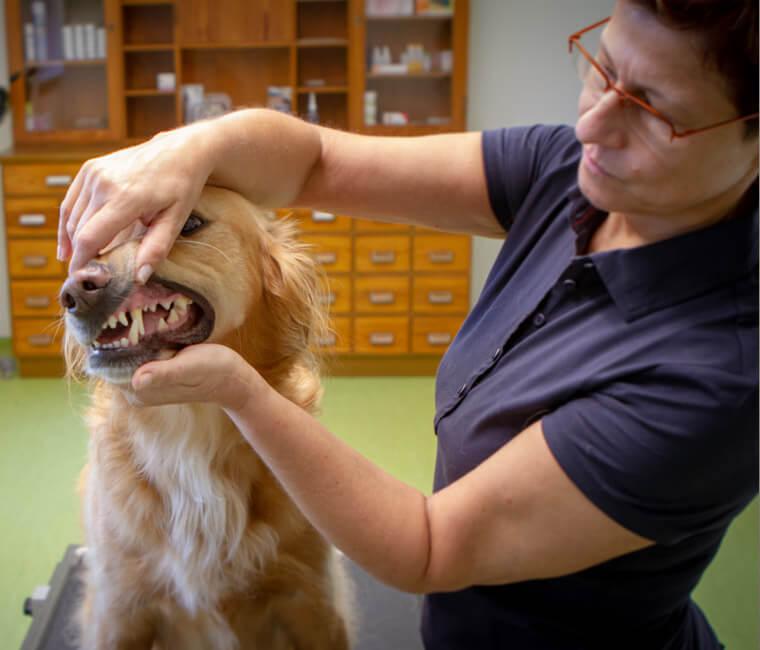 Behandlung eines Hundes in der Tierarztpraxis in Landshut